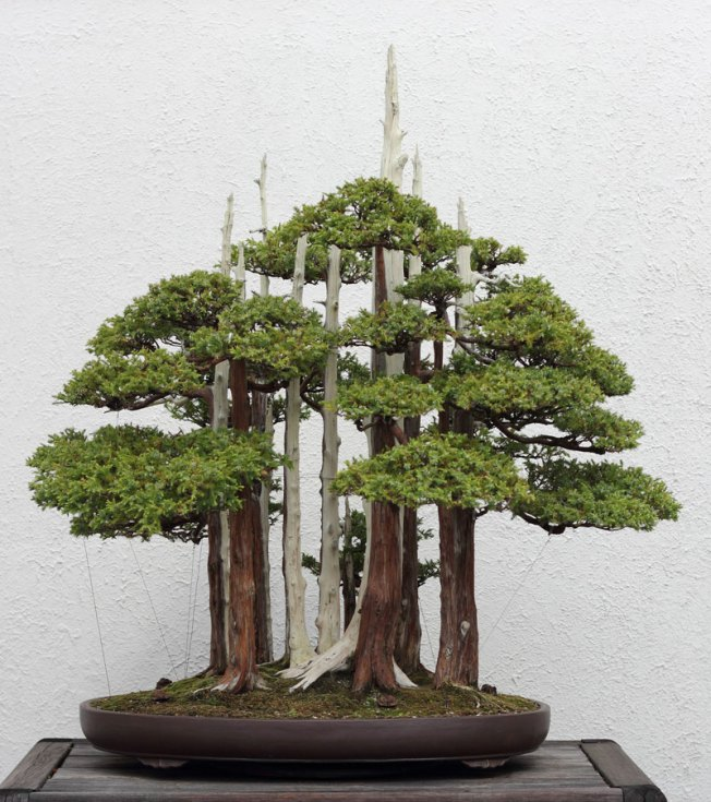 goshin by john naka bonsai forest for grandchildren (3)