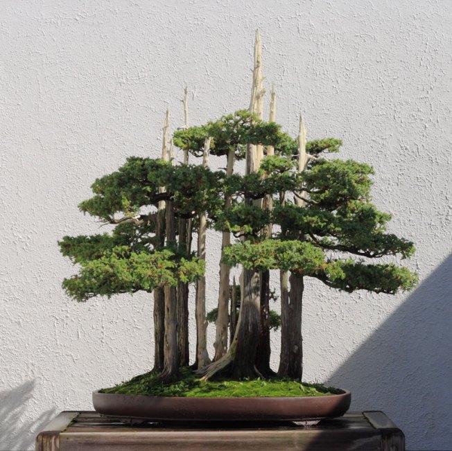 goshin by john naka bonsai forest for grandchildren (5)
